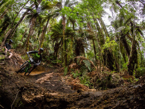 Herodirt in Rotorua
